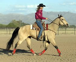 Use Sherry Cervi's surefire method of bringing a horse back into barrel-racing shape after a layoff. From the editors of Horse & Rider magazine.