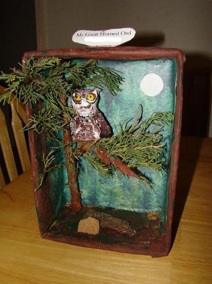 Big Brother, Little Sister: Andy's Great Horned Owl Diorama