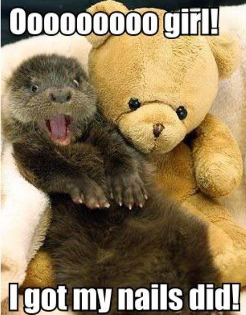 Get otter here! No way!