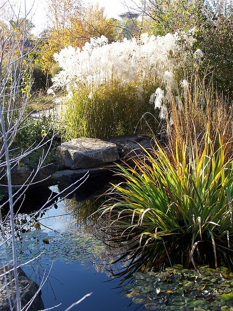 351 best images about ornamental grasses in the garden on for Ornamental grasses for ponds