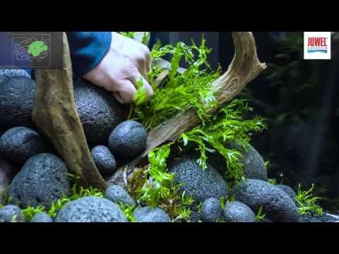 (9) Juwel Aquarium Lido 120 Aquascaping Tutorial - YouTube