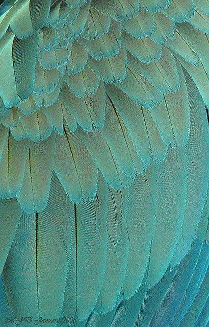 Pattern - Macaw Feathers macro
