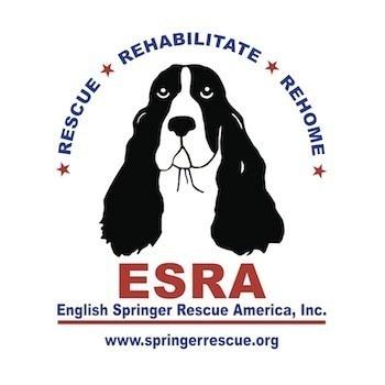 ESRA - English Springer Rescue America - My next Springer will come from ESRA.