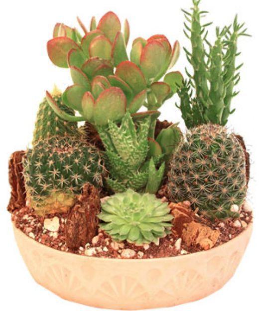 17 Best ideas about Outdoor Cactus Garden on Pinterest Cacti