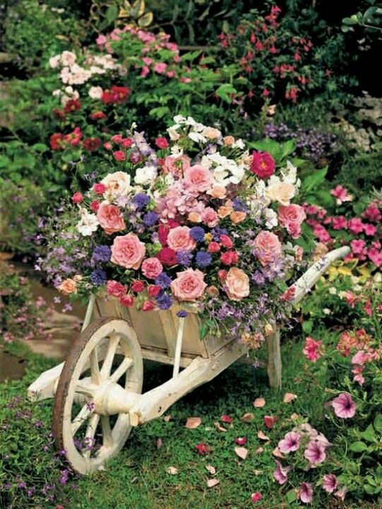 Gorgeous flowers in wheelbarrel