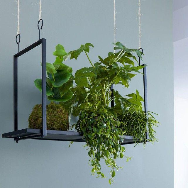 Les 54 meilleures images du tableau plantes d 39 int rieur for Plante a suspendre interieur