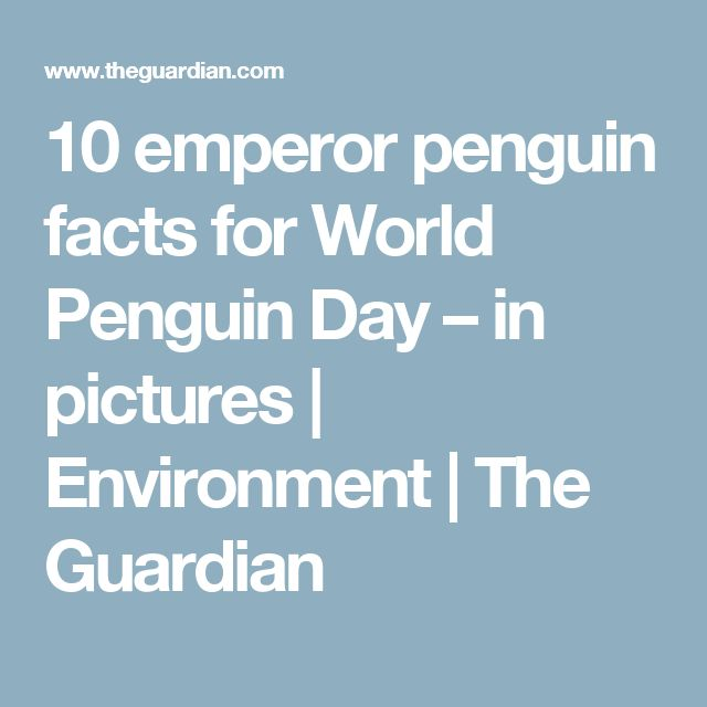 10 emperor penguin facts for World Penguin Day – in pictures | Environment | The Guardian