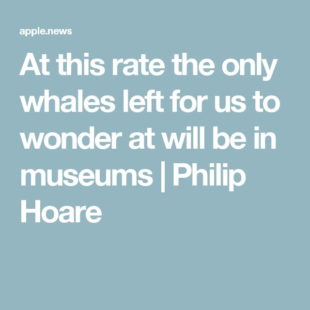At this rate the only whales left for us to wonder at will be in museums | Philip Hoare