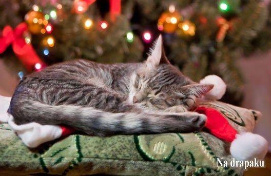 Co zrobić z #kotem w #Święta?