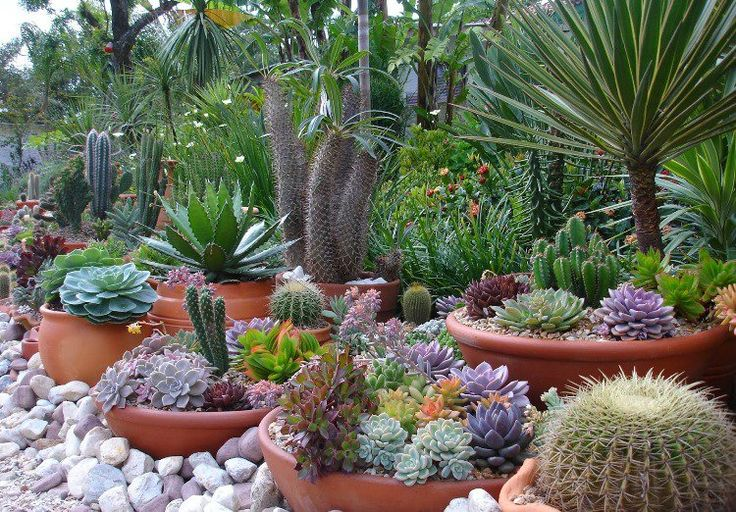 Plantes grasses ext rieur conseils d 39 entretien et id es d co for Grosse plante exterieur
