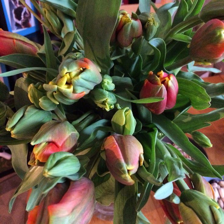 Сегодня в моем доме много цветов. Мое 29 февраля