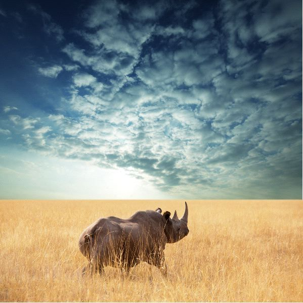 Rhinoceros in a Gorgeous Landscape