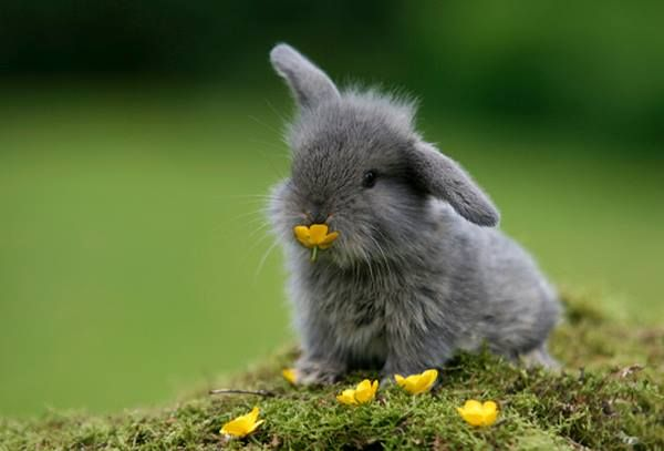cute little bunny collecting flowers