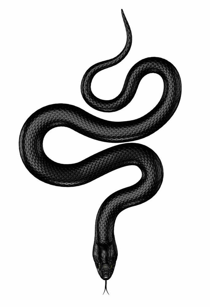 Idea By Edgar Soto On Iphone Wallpapers Black Snake Tattoo
