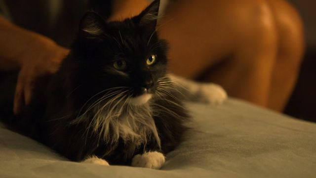 When The Bough Breaks 2016 Cinema Cats Cats Cat Names Tuxedo Cat