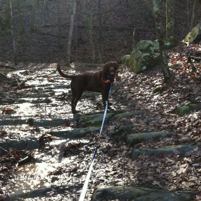 This normally a hiking/biking trail ....this day it was a creek 3/2/2012 Rock cut trail Steele creek park bristol TN