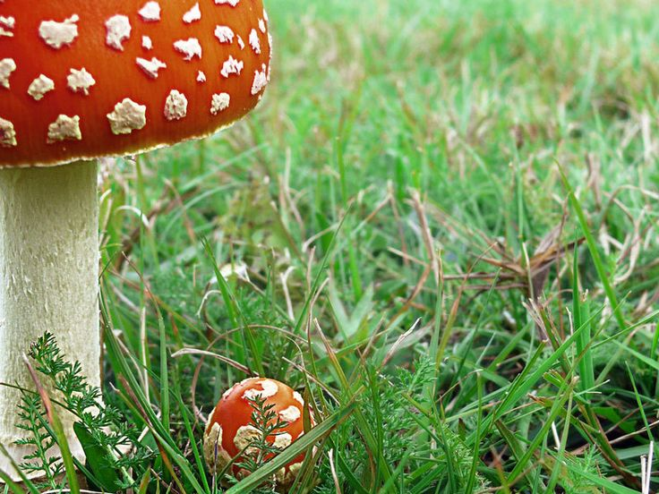 Gespot in de tuin: paddenstoelen (bodemhelden!)