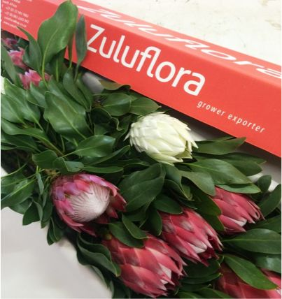 Box of white & red King Protea flowers fresh from our South African farm #capeflora #giantflowers