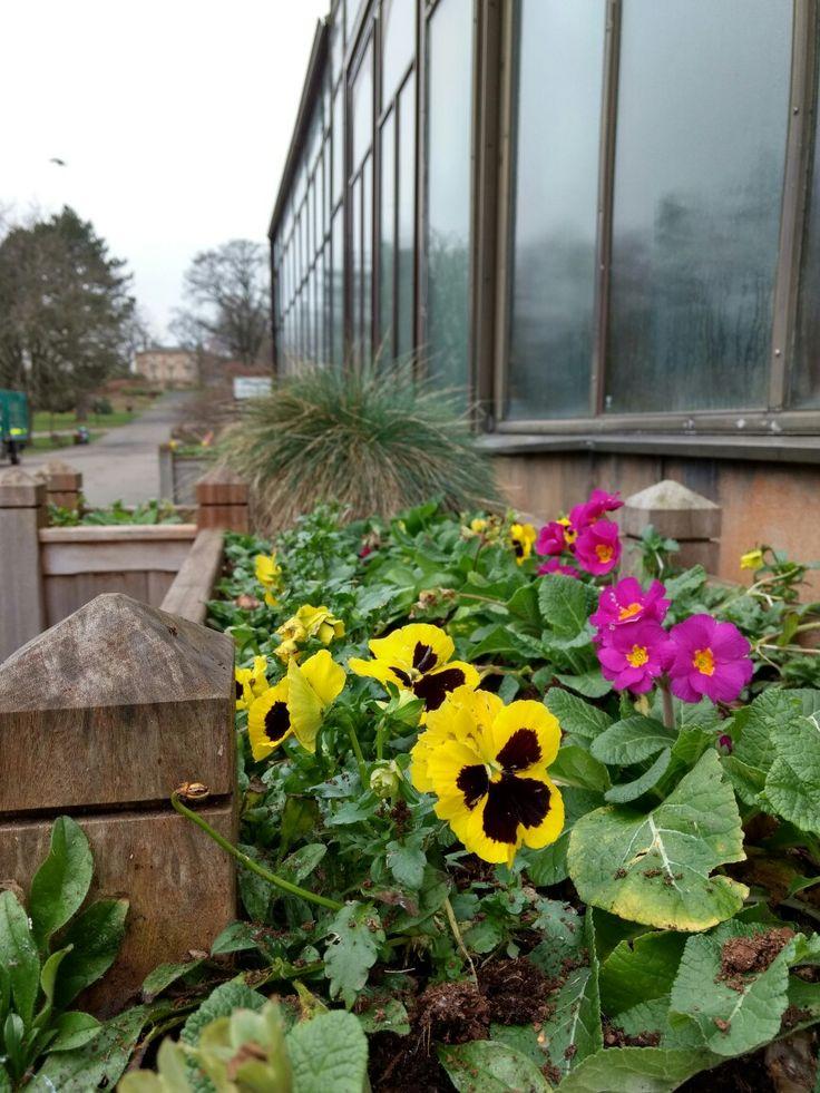 Глазго Шотландия Glasgow Scotland nature UK botanical garden flowers blooming winter in UK