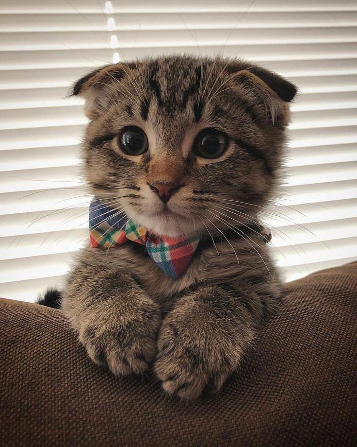 Cute Amazing Cat Cat Care Beautiful Cat Cat Care Tips