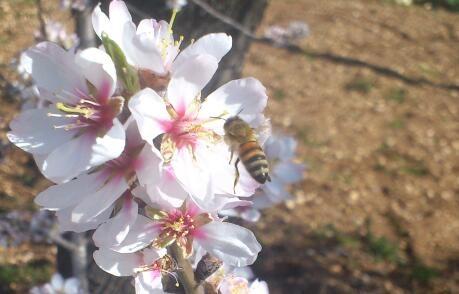 Alla mia ape