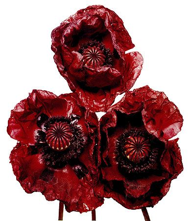 Lest we forget. Three Poppies by Irving Penn.