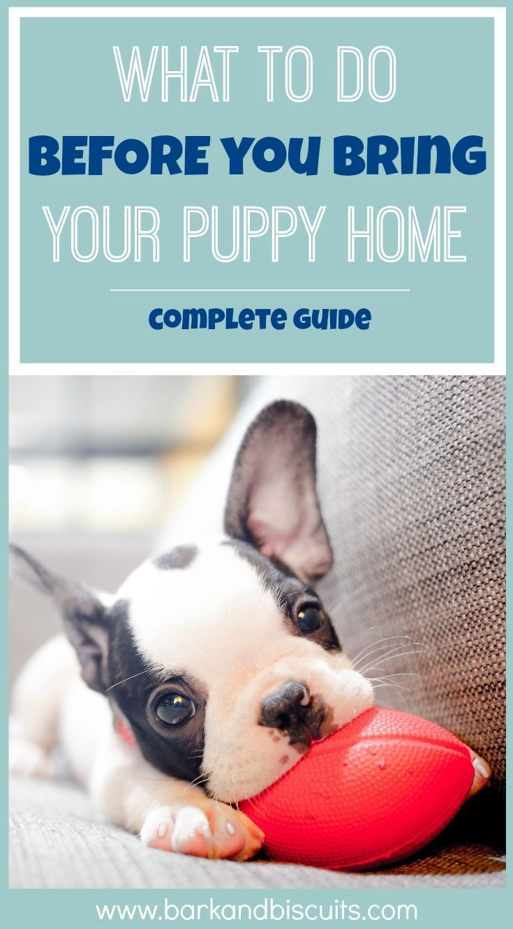 How To Prepare Your Home For A Puppy Complete Guide Puppy Dogs Newpuppy Puppyguide Puppy Proofing Puppy Supplies Training Your Puppy