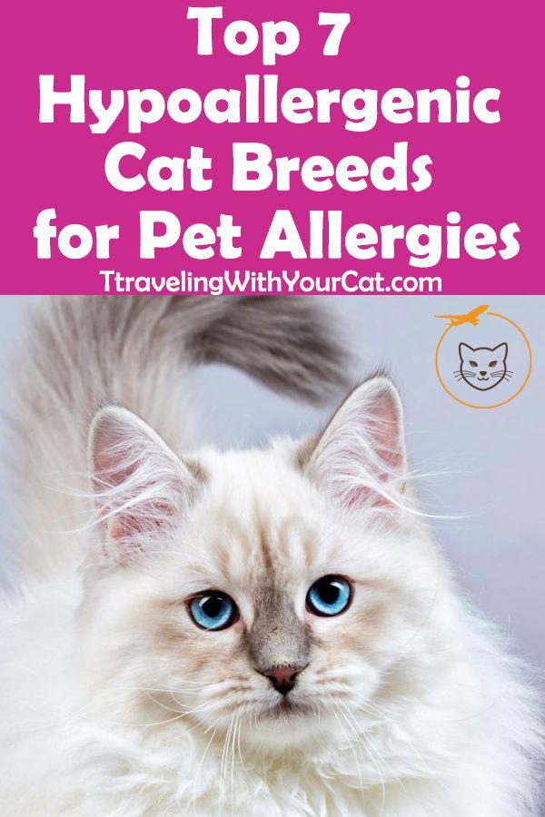Top 7 Hypoallergenic Cat Breeds For Pet Allergies With Images Cat Breeds Hypoallergenic Hypoallergenic Cats Cat Breeds
