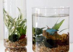 1000 ideas about indoor water garden on pinterest water plants water terrarium and plants indoor - Indoor water plants list ...