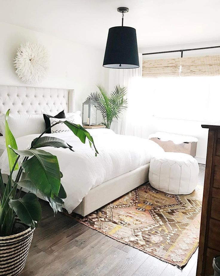 Palm House Plants, Snake Plant And Green Living