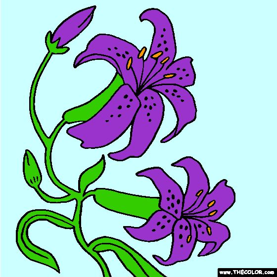 Orchid Flower Coloring Page | Color Orchids