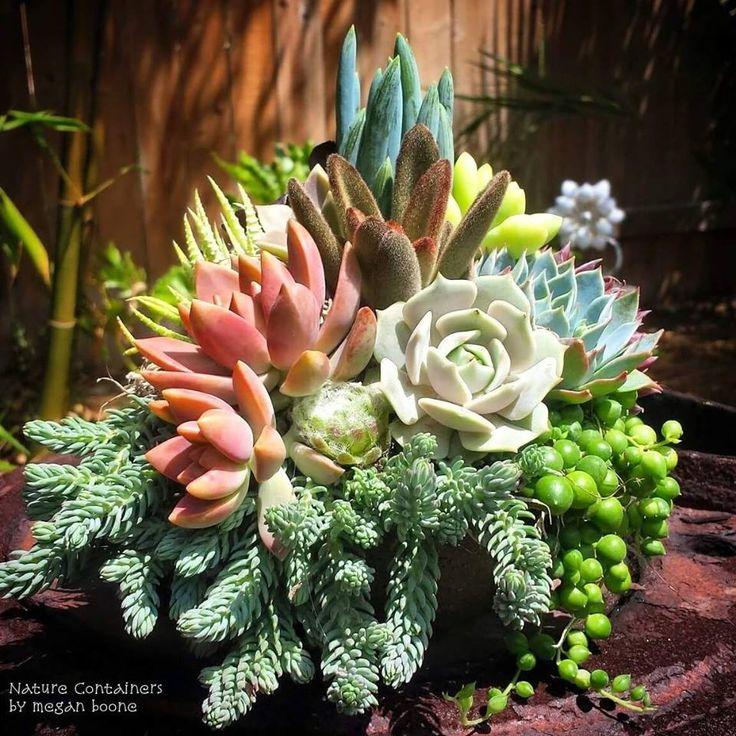 Les 1050 meilleures images du tableau jardin succulents for Arrangement jardin