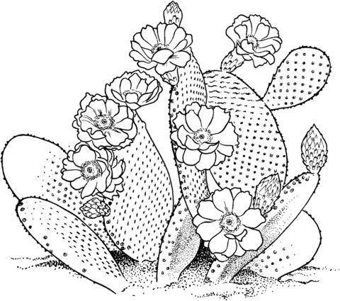 Opuntia prickly pear cactus Coloring page
