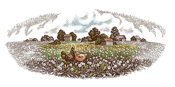 Illustrations for dairy products «Svoi Produkti» by Tatiana Trikoz