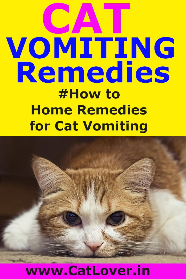 Cat Vomiting Remedies Home Remedies For Cat Vomiting Vomiting Remedies Home Remedies Remedies