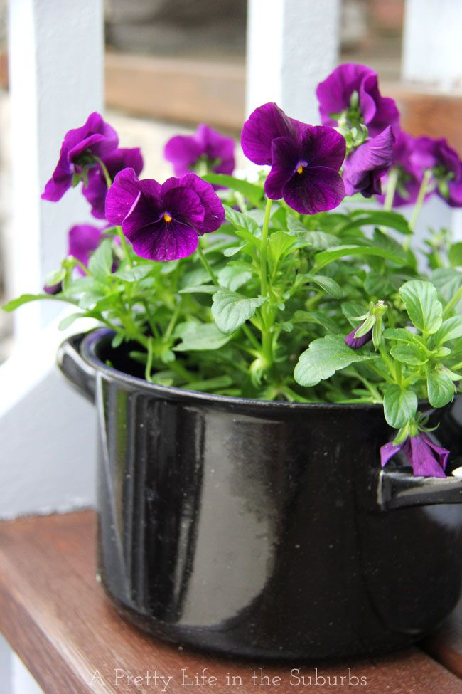 Pansies in 1930's enamel pot - I love using unique planters for flowers!