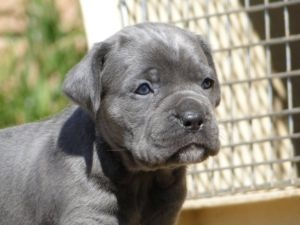 Dogs and puppies for adoption Gumtree Johannesburg