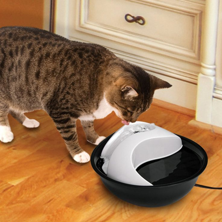 New Pet Drinker Dog Cat Feeder Automatic Feedding Animal Pet Bowl Water Bowl For Pets // FREE Shipping //     Buy one here---> https://thepetscastle.com/new-pet-drinker-dog-cat-feeder-automatic-feedding-animal-pet-bowl-water-bowl-for-pets/    #hound #sleeping #puppies
