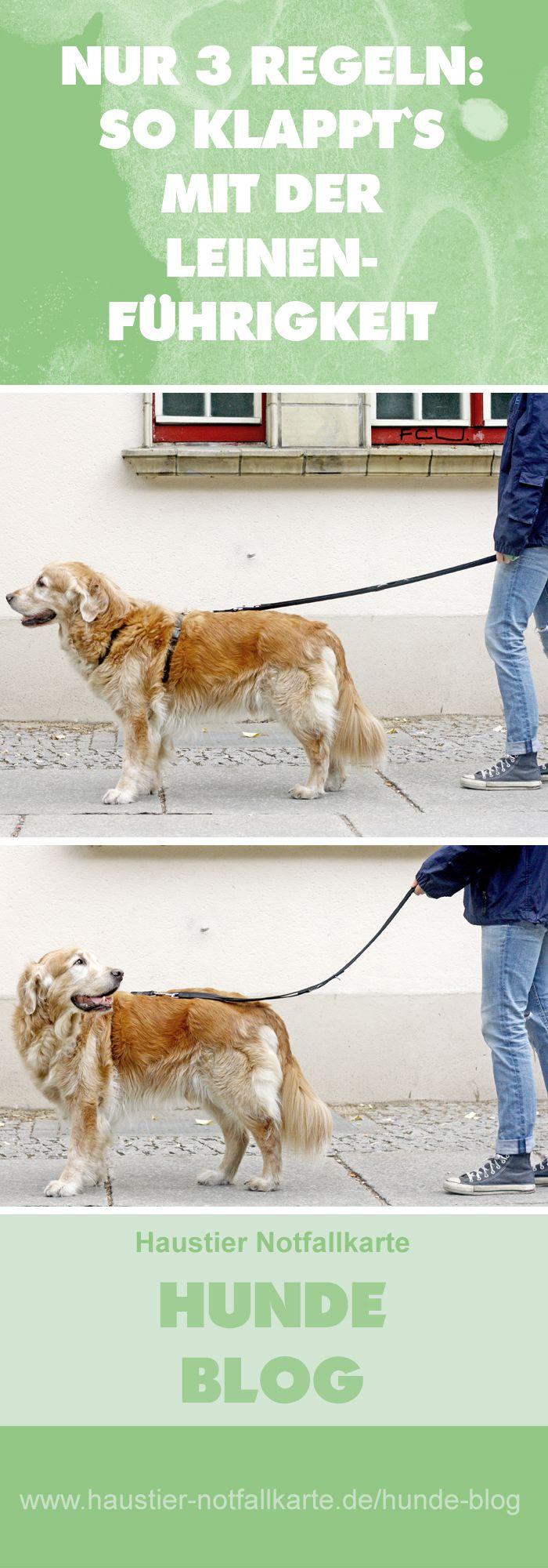 Nur 3 Regeln: so klappt's mit der Leinenführigkeit! Im Haustier Notfallkarte Hunde Blog! #hunde #wissen
