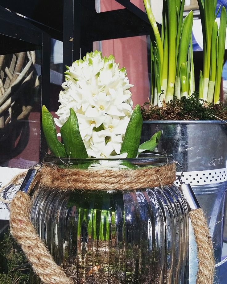 #kwiaty #wiosna #spring #kwiaciarniaszczecin #szczecin #flowergfits #gifts #sun #hiacynty