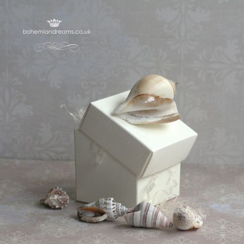 conus shell wedding favour box www.bohemiandreams.co.uk