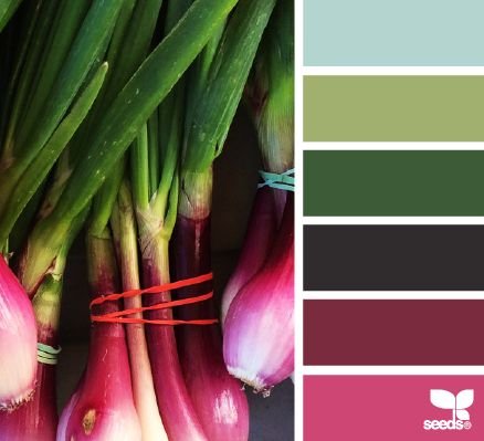 Market hues - design seeds