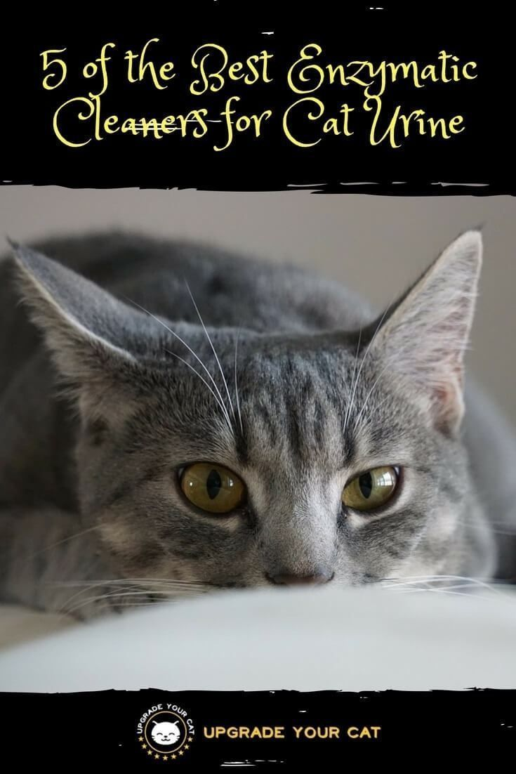 5 Of The Best Enzymatic Cleaners For Cat Urine Upgrade Your Cat In 2020 Cat Urine Remover Cats Cat Behavior