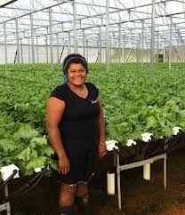 Farms in fiji