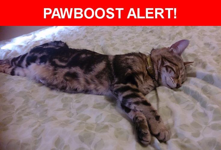 Please spread the word! Aurora was last seen in Two Mile Ash, England MK8 8JA.    Nearest Address: Denmead, Two Mile Ash, United Kingdom