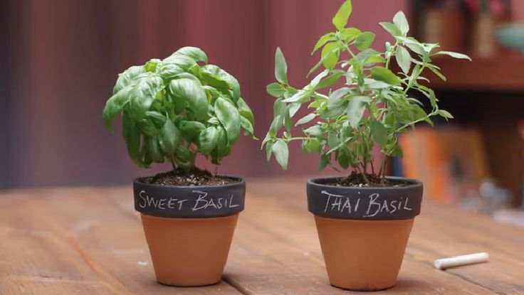 Charming & Changeable Chalkboard Pots. Part of the series: #eHowHacks: DIY Design. We'll chalk this hack idea up to pure genius. Learn about making interchangeable labels for potted plants with help from #eHowHacks.