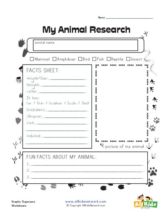 Graphic Organizer Animal Research Schoolagers Animal border=