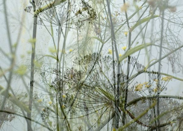 """""""Grass Verge"""" / Images of Nether Edge .Kath Williamson"""