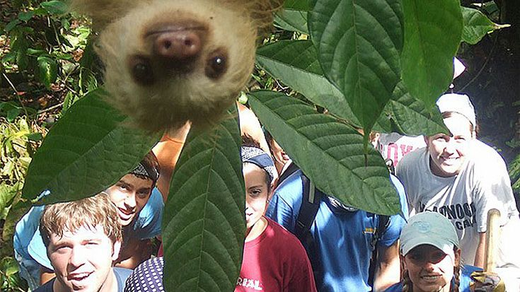 Sloth photobombs volunteers in Costa Rica