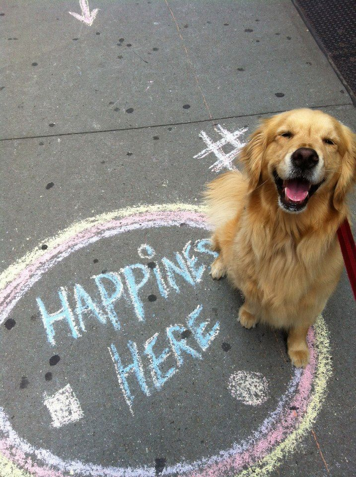 Absolutely correct! Cute pet photo session idea. | Golden Retriever | Sidewalk Chalk Art | Dog | Puppy |Pet Photography | Dogs | Puppies